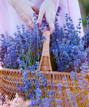 Vườn đầy hoa